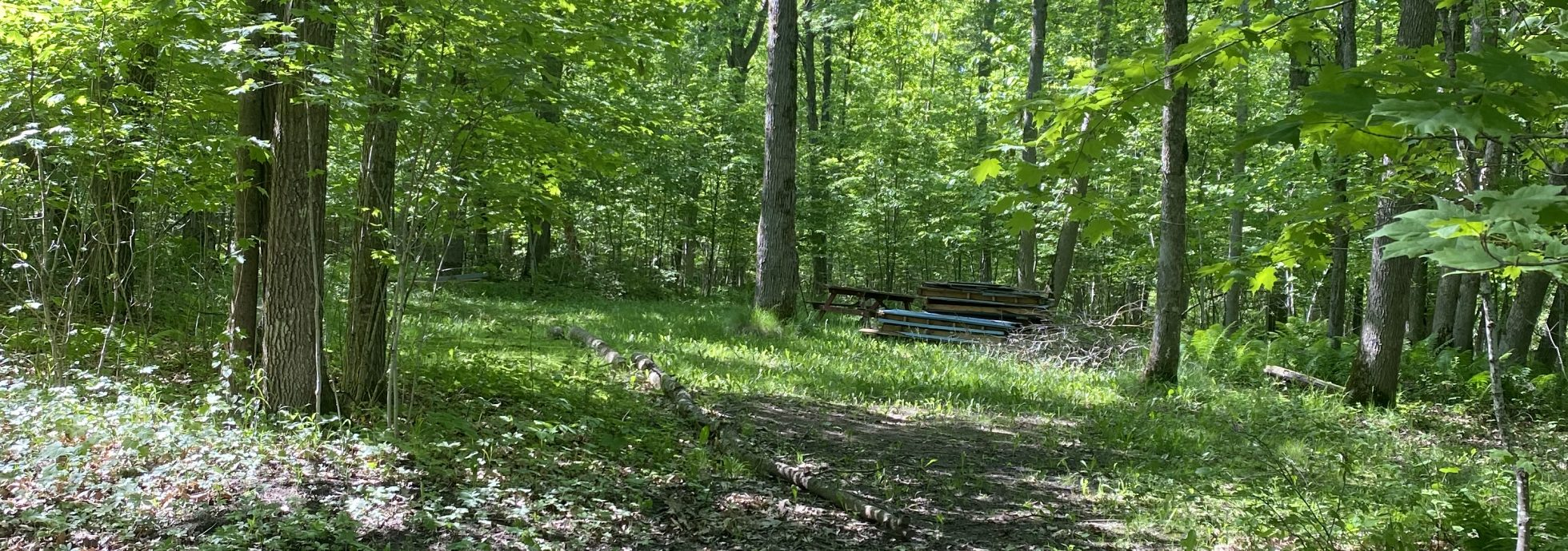 Primitive Camping at TJ's Timberline